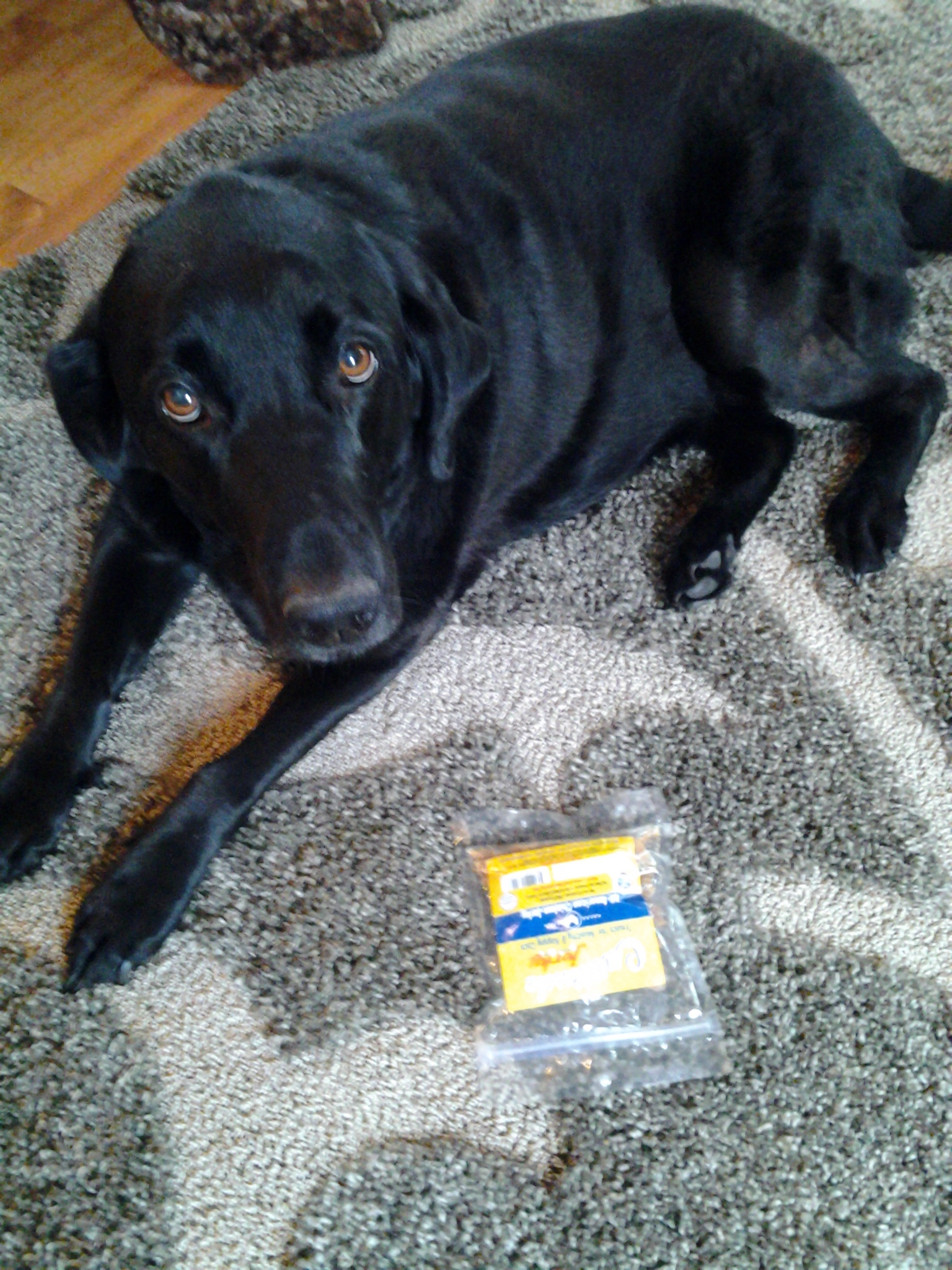 Dog Gone Jerky Review | Emily Reviews