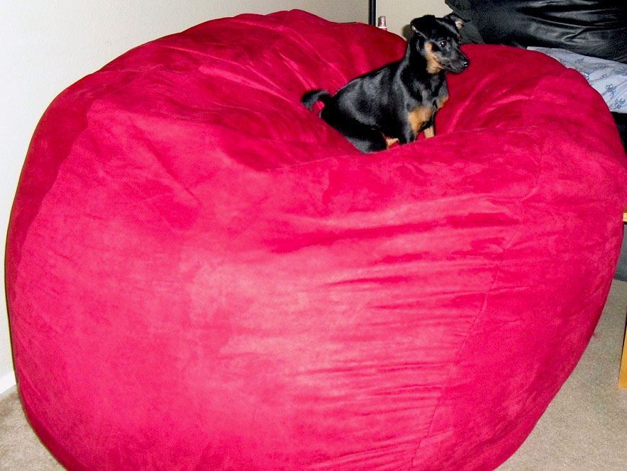 Amazing Sumo Lounge Sumo Sultan Bean Bag Chair Review Emily Reviews Bralicious Painted Fabric Chair Ideas Braliciousco