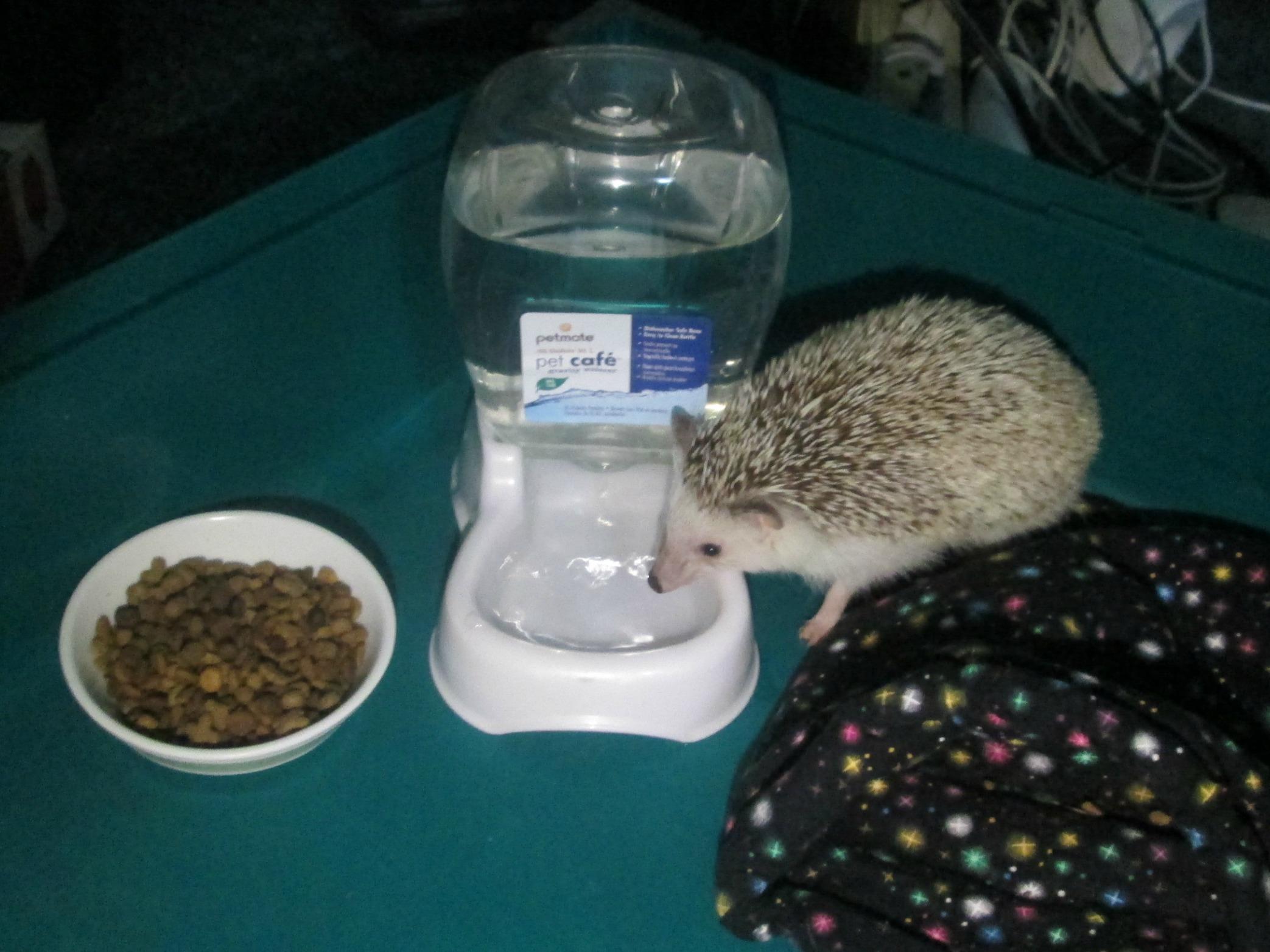 gravity waterer for hedgehog