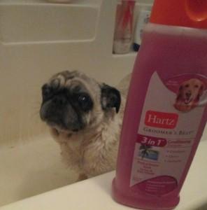 pug beans hartz shampoo