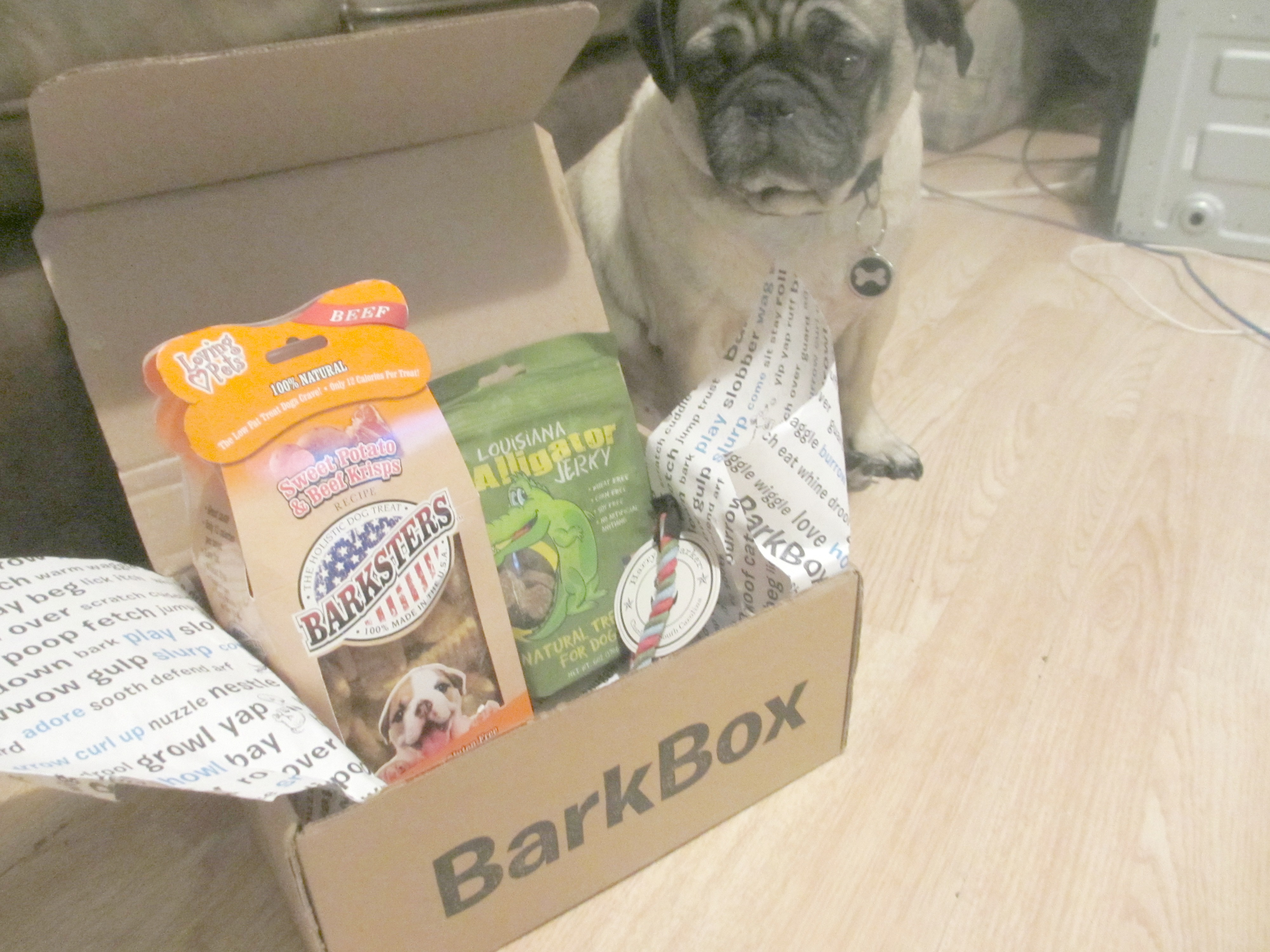 January Barkbox For Small Dogs Review Emily Reviews