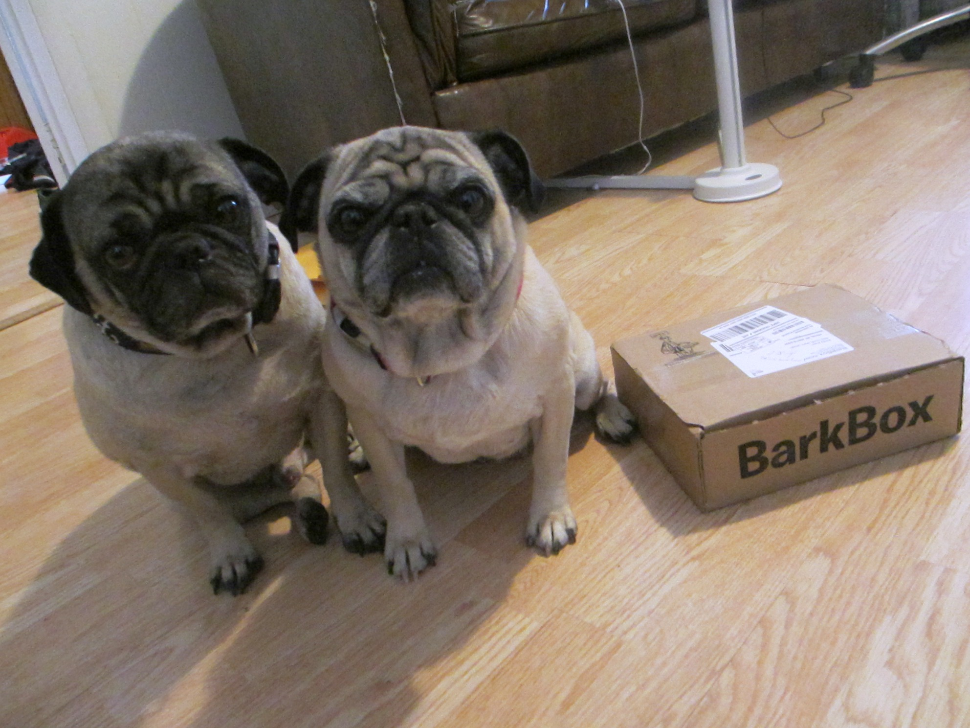 February BarkBox For Small Dogs Review | Emily Reviews