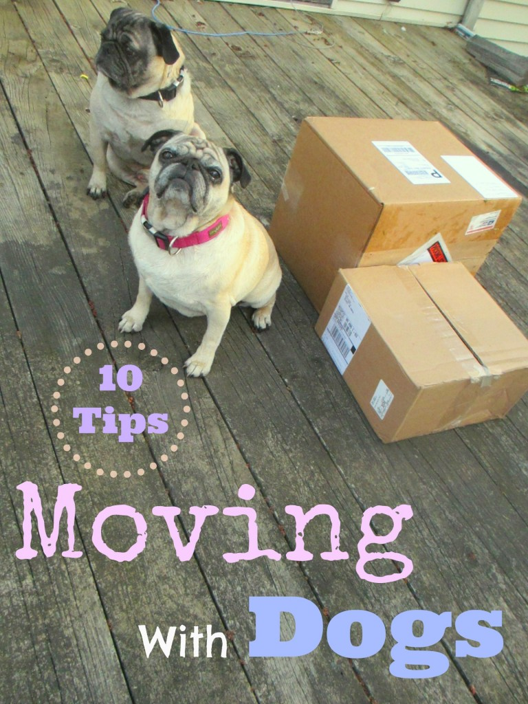 10 Tips For Moving With Dogs