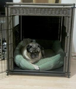 Solvit wicker residence pug