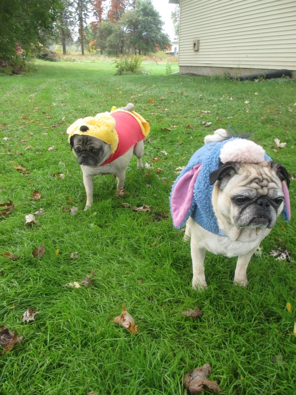 The Pugs Halloween Costumes From Petsmart Emily Reviews