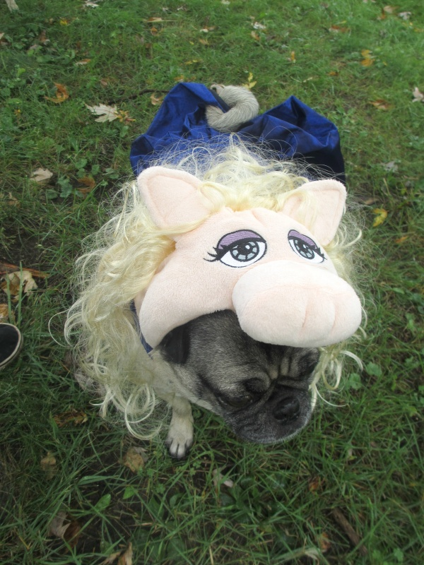 pug petsmart the pugs halloween costumes from petsmart emily reviews 6944