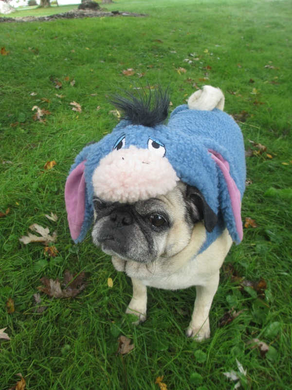 pug petsmart the pugs halloween costumes from petsmart emily reviews 6107