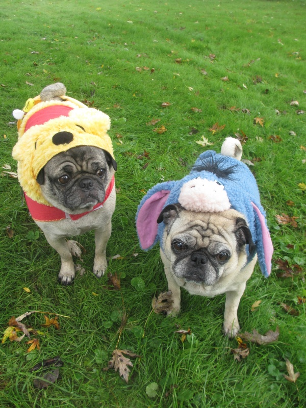 pug petsmart the pugs halloween costumes from petsmart emily reviews 3072