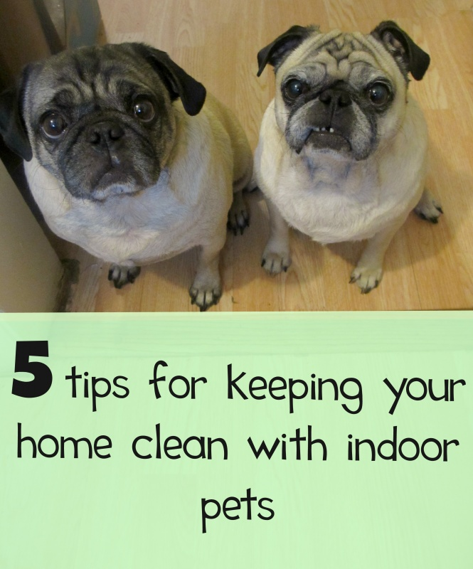 5 Ways For Families With Pets To Keep Their Homes Clean