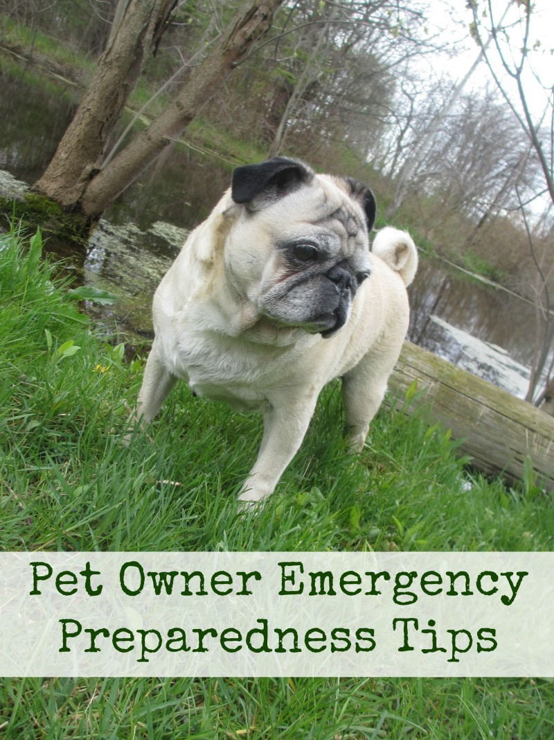 pet owner emergency preparedness tips. How to be prepared for a natural disaster emergency when you have a cat or dog.