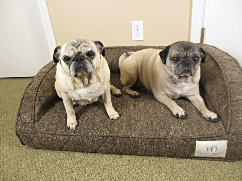 brentwood yunyon dog bed medium
