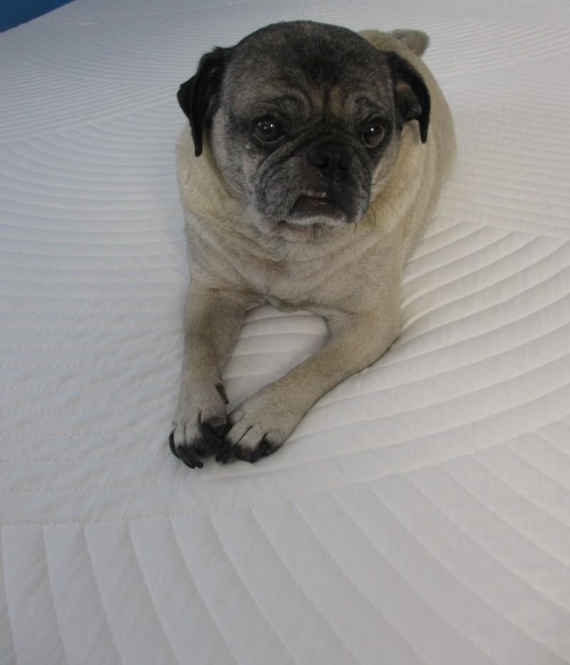 nolah mattress review blog