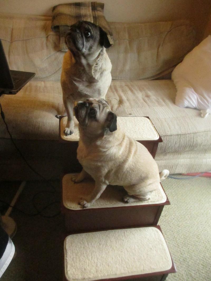 Solvit wood dog stairs
