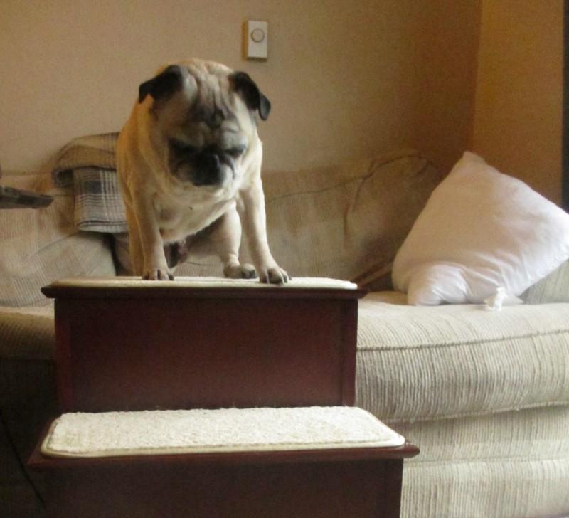 Solvit three level dog steps