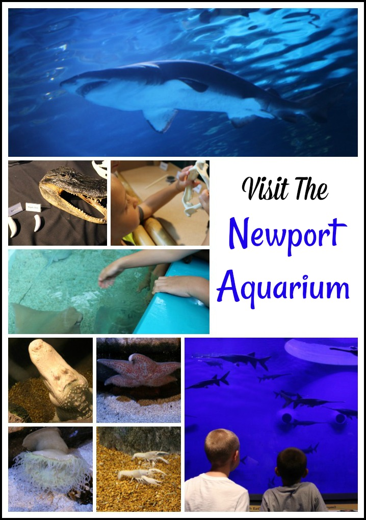 Visit The Newport Aquarium Just Across The River From