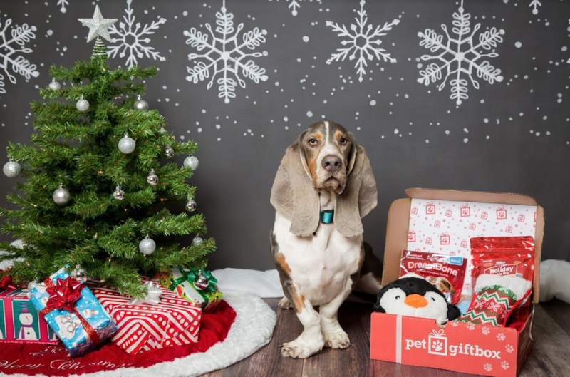 PetGiftBox Pet Subscription Box for dogs and cats.