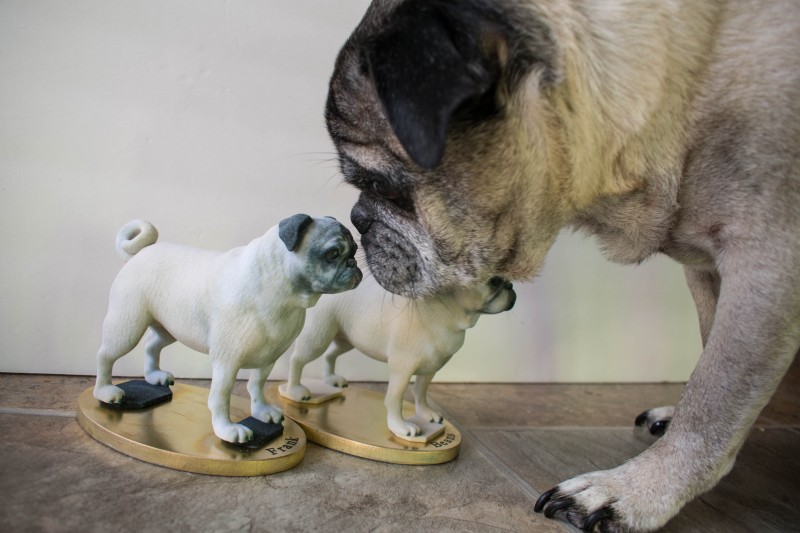 Real dog with dog figurine arty lobster pug