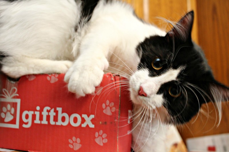 Pet Gift Box Discount {Mail For Your Furry Family Member}