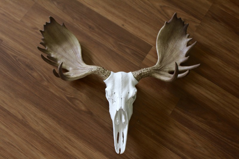 Wall Charmers Faux Taxidermy Alberta Moose Skull Review