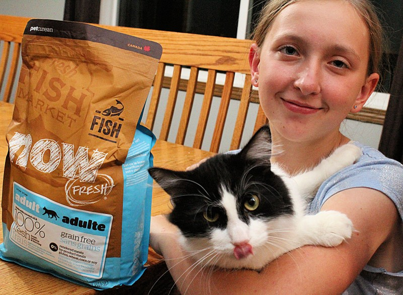 Now Fresh Grain-Free Adult Fish Recipe Dry Cat Food From Chewy.com