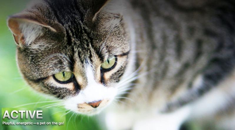 okocat Natural Cat Litter