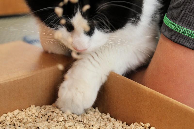 okocat Natural Cat Litter 1