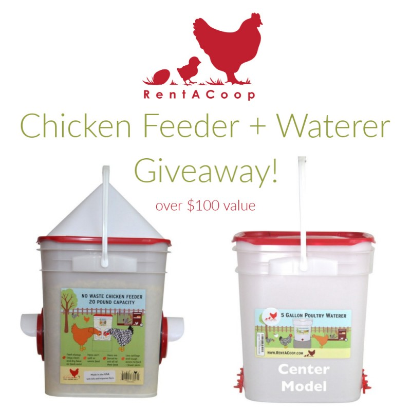 RentACoop Chicken Feeder & Waterer Giveaway 2