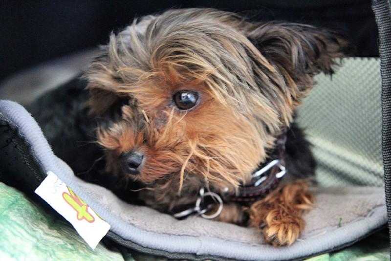 Pet Magasin Collapsible Pet Carrier & Pet Beds