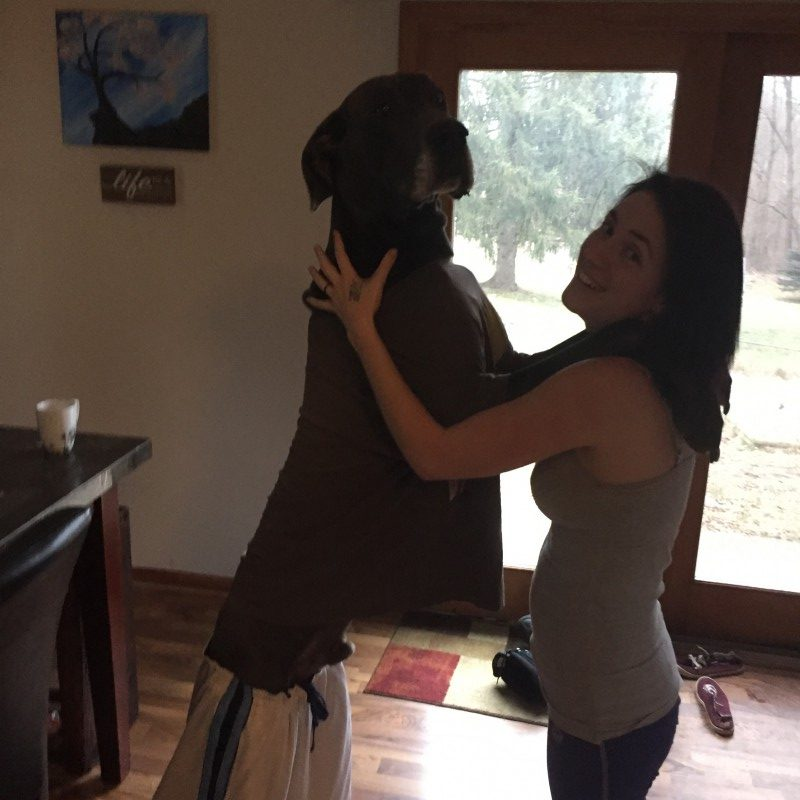 why great danes are the best family dogs