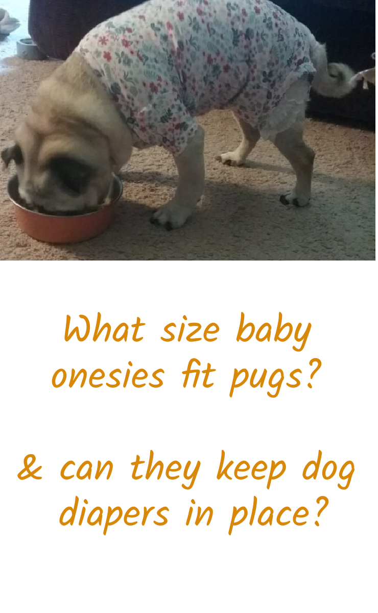 what size onesie fits a pug and can a onesie keep a dog diaper on