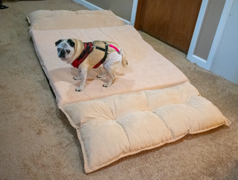 floor sofa bed review