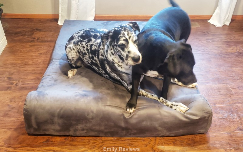 Orthopedic Dog Bed, Senior Dogs, Dog Health, Dog Joints, Dog Arthritis, Great Dane, Mastiff, PIt mix, Giant Dog Bed, Pet Gifts, Holiday Gift Guide