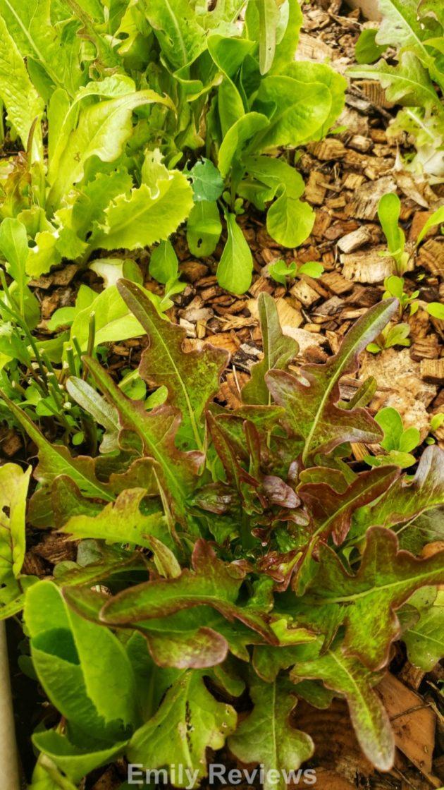 Heirloom Seeds, Rare Seeds, Vegetable Seeds, Fruit Seeds, Herb Seeds, Flower Seeds, Family Garden, Fresh Produce