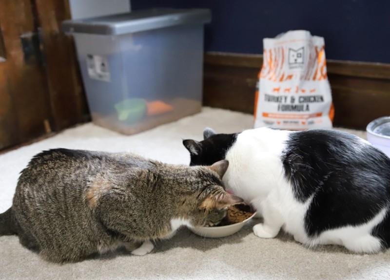 squarepet cat food