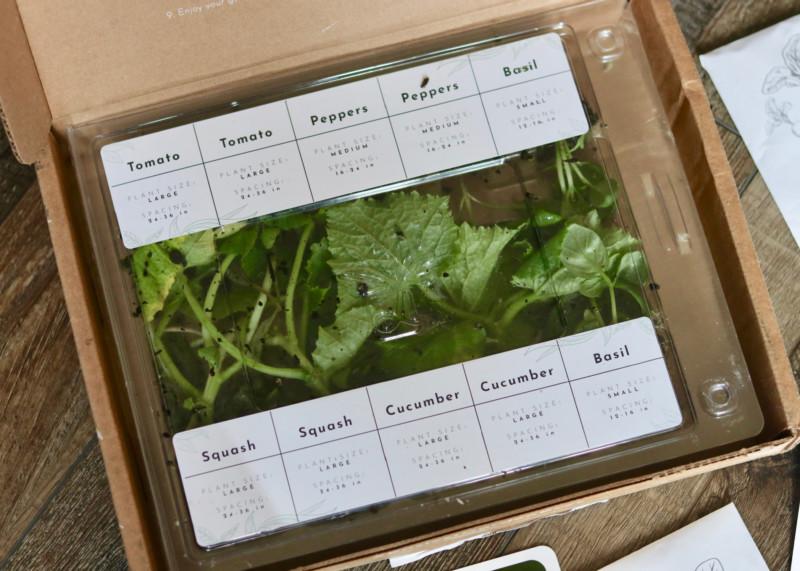 Leaf'd Box